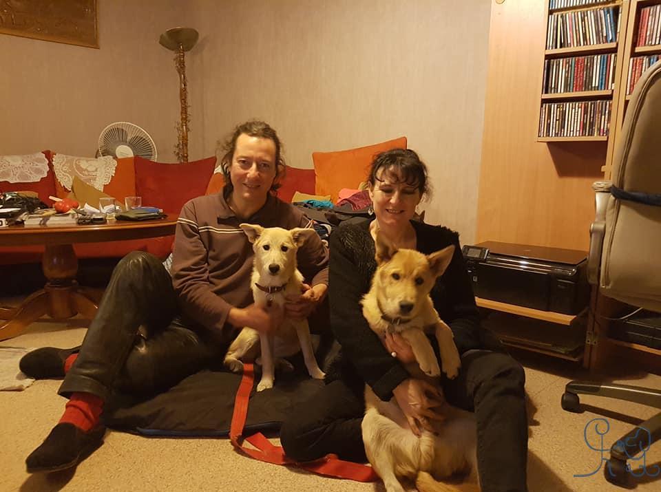 Natty et Néo, chiens de Canaan