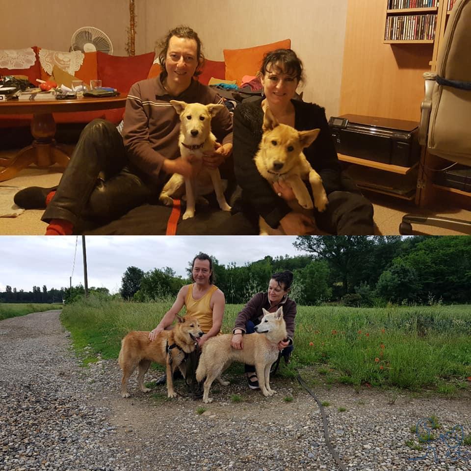 Néo et Natty, chiens de canaan