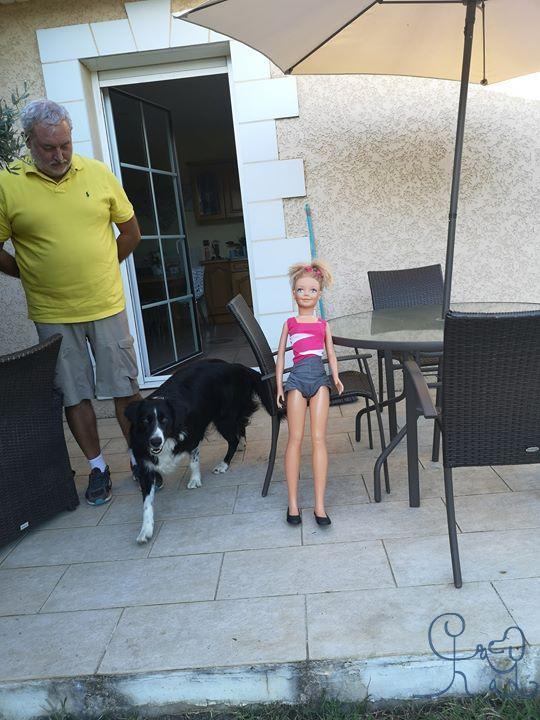 Un chien pas à l aise avec les enfants ? On y va d