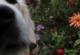 Objectif Chiens - éducateur canin & comportementaliste