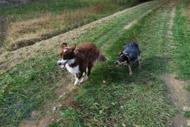 Est ce que les chiens nous comprennent ? Objectif Chiens éducatrice comportementale