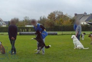 Dressage de chiens : solidarité de centaines d'édu