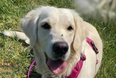 [actualités] #positif : Objectif chiens reprend du service!