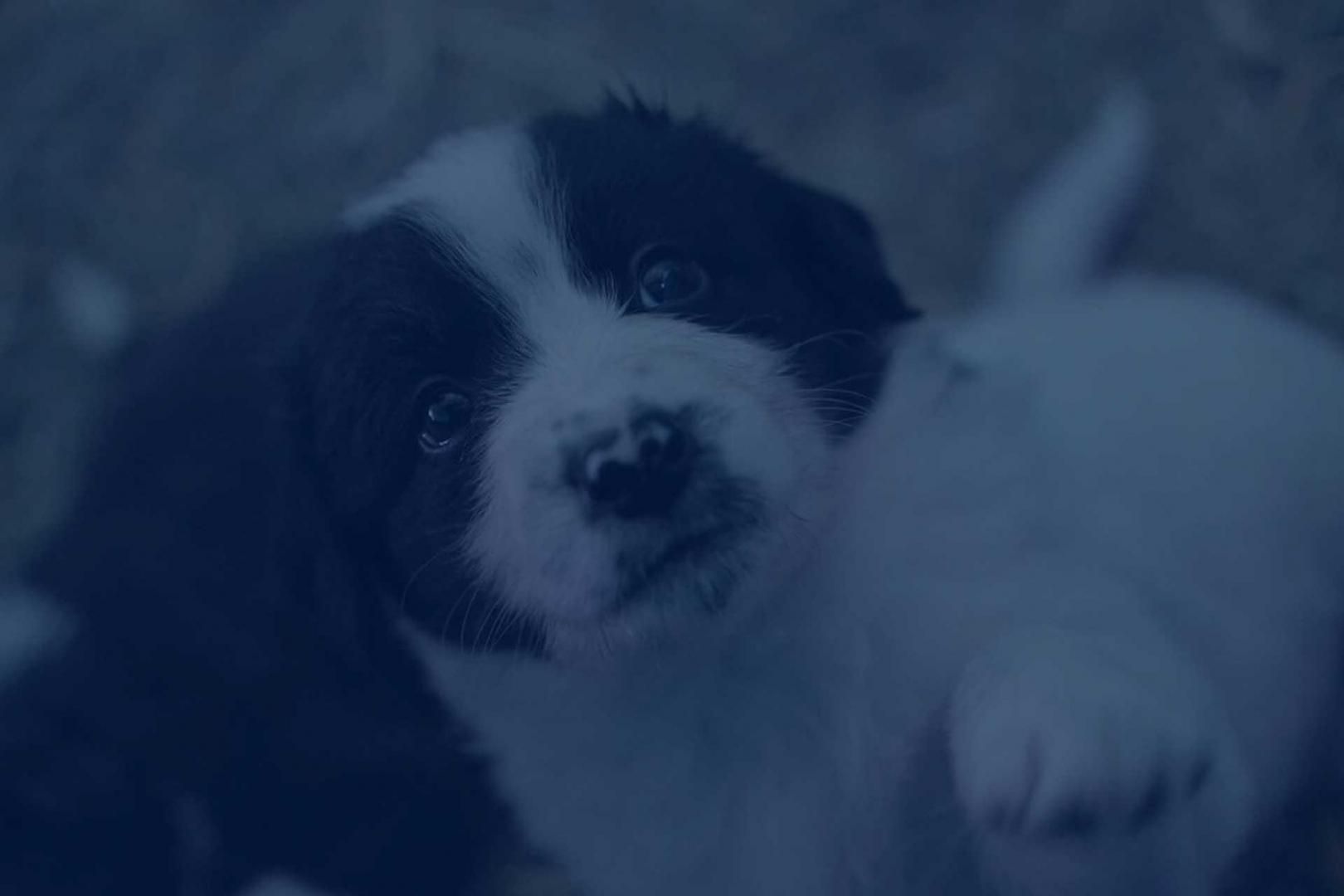 Comment dresser un chiot ? Objectif Chiens educatrice canin Rhône Alpes